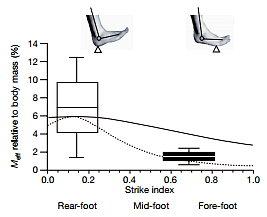 運動生理週訊第292期「跑步應該用腳跟或腳尖先著地呢?」