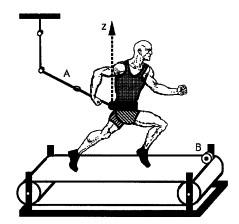 運動生理週訊第368期 跑步的時空 (spatio temporal) 參數